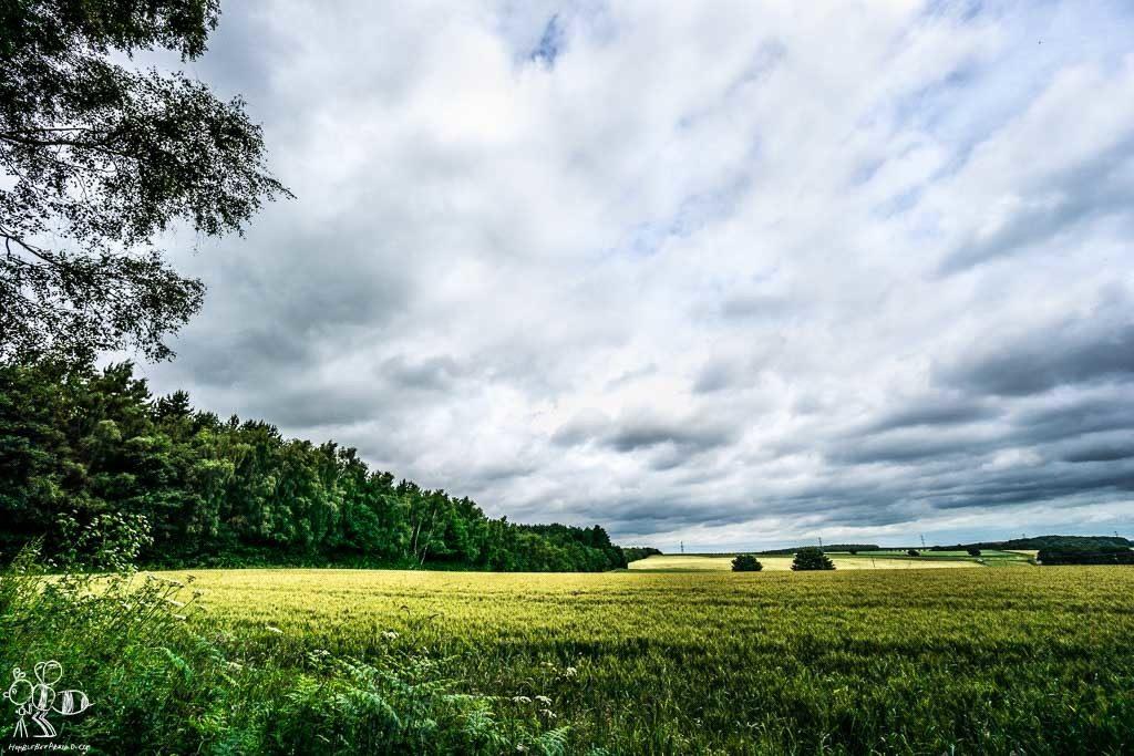field-forest-nottingham-04587-amanda-reid